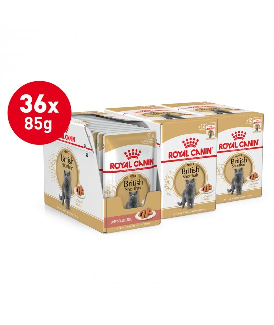 Royal Canin British Shorthair In Gravy Adult Over 12 Months Pouches Wet Cat Food 85gm x 36