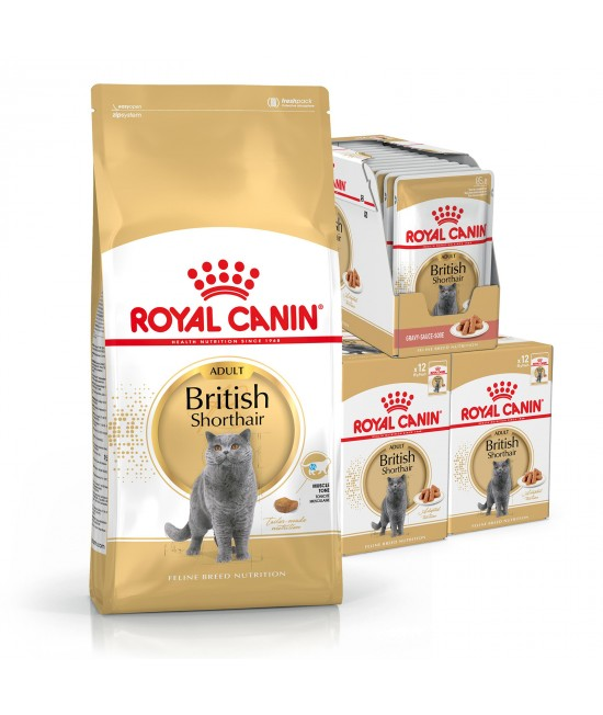 Royal Canin Bundle British Shorthair Adult Wet And Dry Cat Food